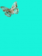Schmetterling Art
